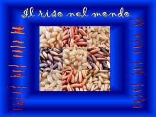 Il riso nel mondo