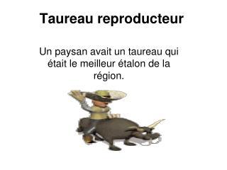Taureau reproducteur