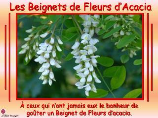 Les Beignets de Fleurs d'Acacia