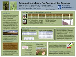 Comparative Analysis of Two Tidal Marsh Bird Genomes