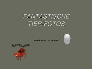 FANTASTISCHE   TIER-FOTOS Weiter bitte mit einem :