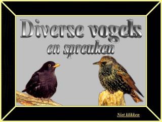 Diverse vogels