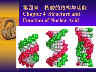第四章  核酸的结构与功能 Chapter 4  Structure and Function of Nucleic Acid