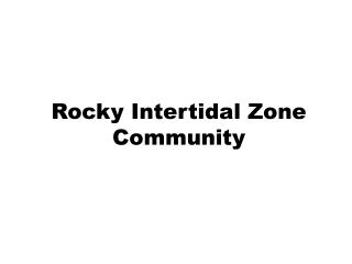 Rocky Intertidal Zone Community