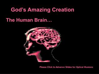 God�s Amazing Creation