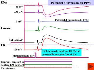 Potentiel d'inversion du PPM