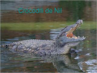 Crocodil i de Nil