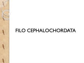 FILO CEPHALOCHORDATA