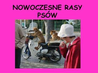 NOWOCZESNE RASY PS�W