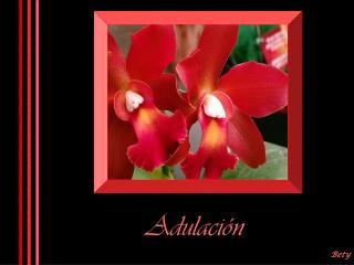 Adulación