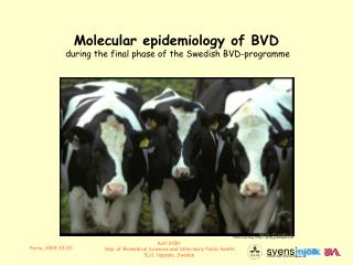 Molecular epidemiology of BVD  during the final phase of the Swedish BVD-programme
