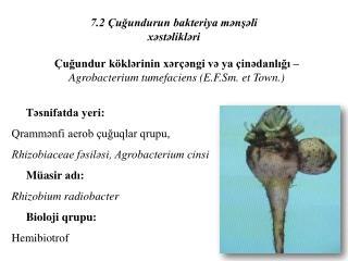 Təsnifatda yeri: Qrammənfi aerob çuğuqlar qrupu,  Rhizobiaceae fəsiləsi, Agrobacterium cinsi