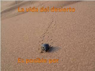 La vida del desierto