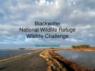 Blackwater  National Wildlife Refuge  Wildlife Challenge
