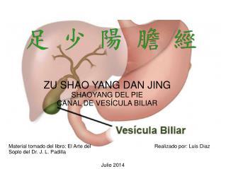 ZU SHAO YANG DAN JING SHAOYANG DEL PIE CANAL DE VESÍCULA BILIAR