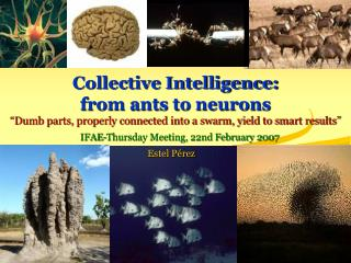 Collective Intelligence:  from ants to neurons