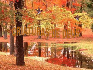 CRIATURAS DE DEUS