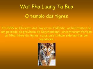 Wat Pha Luang Ta Bua O templo dos tigres
