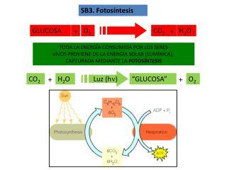 SB3. Fotosíntesis