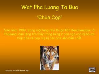 """Wat Pha Luang Ta Bua """" Chùa Cọp """""""
