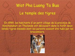 Wat Pha Luang Ta Bua Le temple des tigres