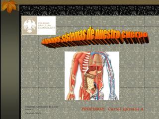 Algunos sistemas de nuestro cuerpo