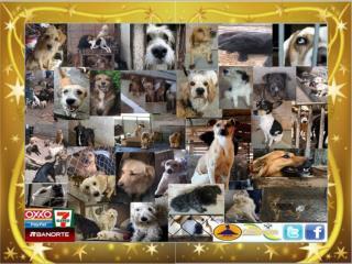 Cachorros  Omeyocan para Adopción.
