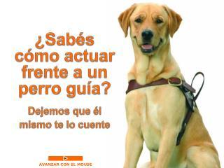 ¿Sabés  cómo actuar frente a un  perro guía?