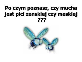 Po czym poznasz, czy mucha jest plci zenskiej czy meskiej  ???