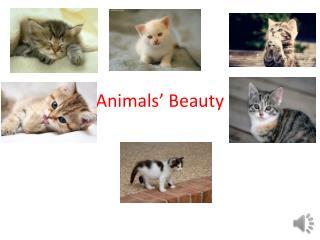 Animals' Beauty