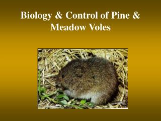 Biology  Control of Pine  Meadow Voles