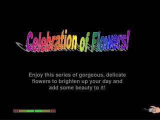 Celebration of Flowers!