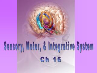 Sensory, Motor,  Integrative System