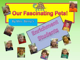 Our Fascinating Pets!