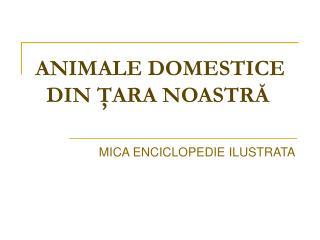 ANIMALE DOMESTICE DIN ŢARA NOASTRĂ