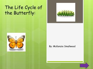 The Life Cycle of the Butterfly:
