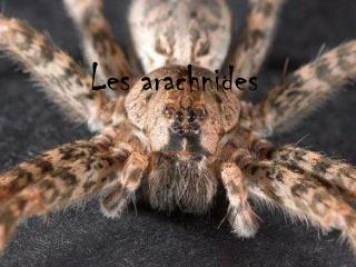 Les arachnides