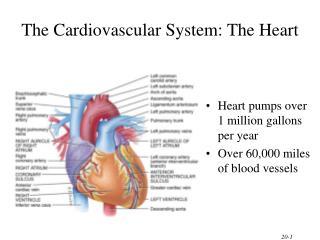 The Cardiovascular System: The Heart