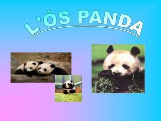 L'ÓS PANDA