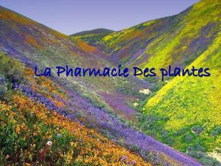 La Pharmacie Des plantes
