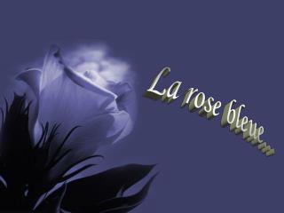 La rose bleue...