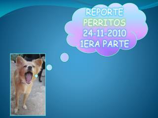 REPORTE PERRITOS 24-11-2010 1ERA PARTE