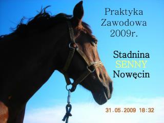 Praktyka Zawodowa 2009r.