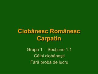 Ciobănesc Românesc Carpatin