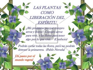 LAS PLANTAS COMO LIBERACIÓN DEL ESPÍRITU