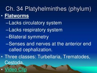 Ch.  34 Platyhelminthes (phylum)