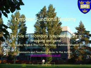 Lymphoid Functional Anatomy