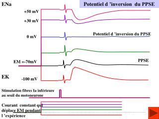 Potentiel d'inversion  du PPSE