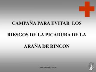CAMPAÑA PARA EVITAR  LOS RIESGOS DE LA PICADURA DE LA ARAÑA DE RINCON