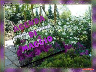 L�8 maggio � il giorno dedicato alla festa della mamma.  Tantissimi auguri a tutte le mamme.
